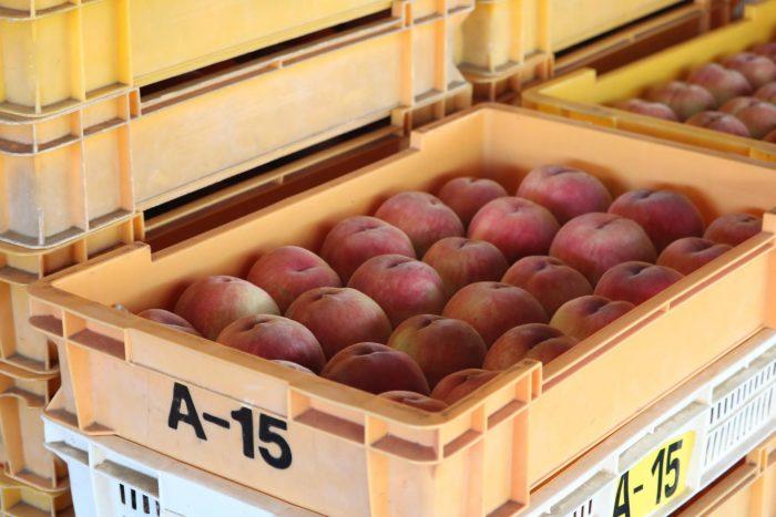 箱に詰められたはねだしの桃