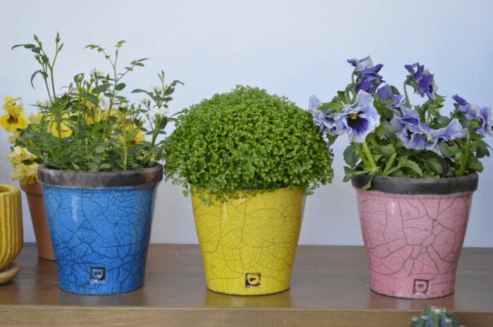 鉢に植えられたお花の写真