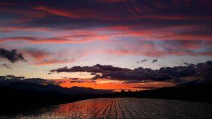 韮崎の田んぼに夕日が写っている写真