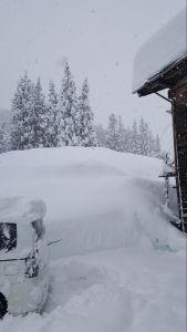 新潟の雪の写真