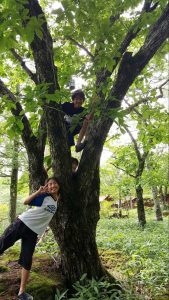 子どもたちが木で遊んでいる写真