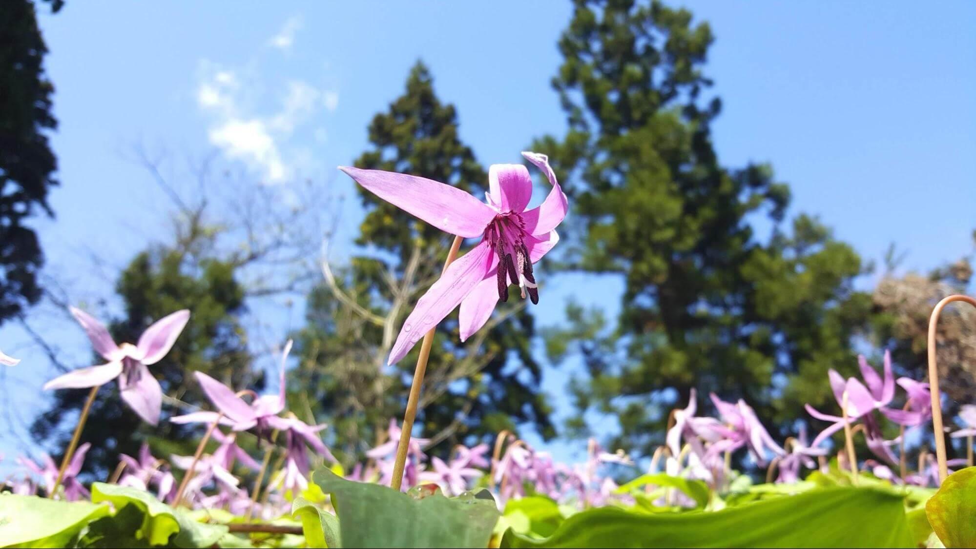新潟の春の花の写真