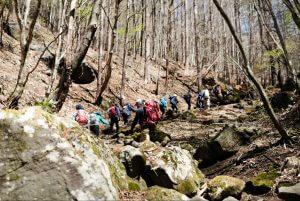 登山道の写真1