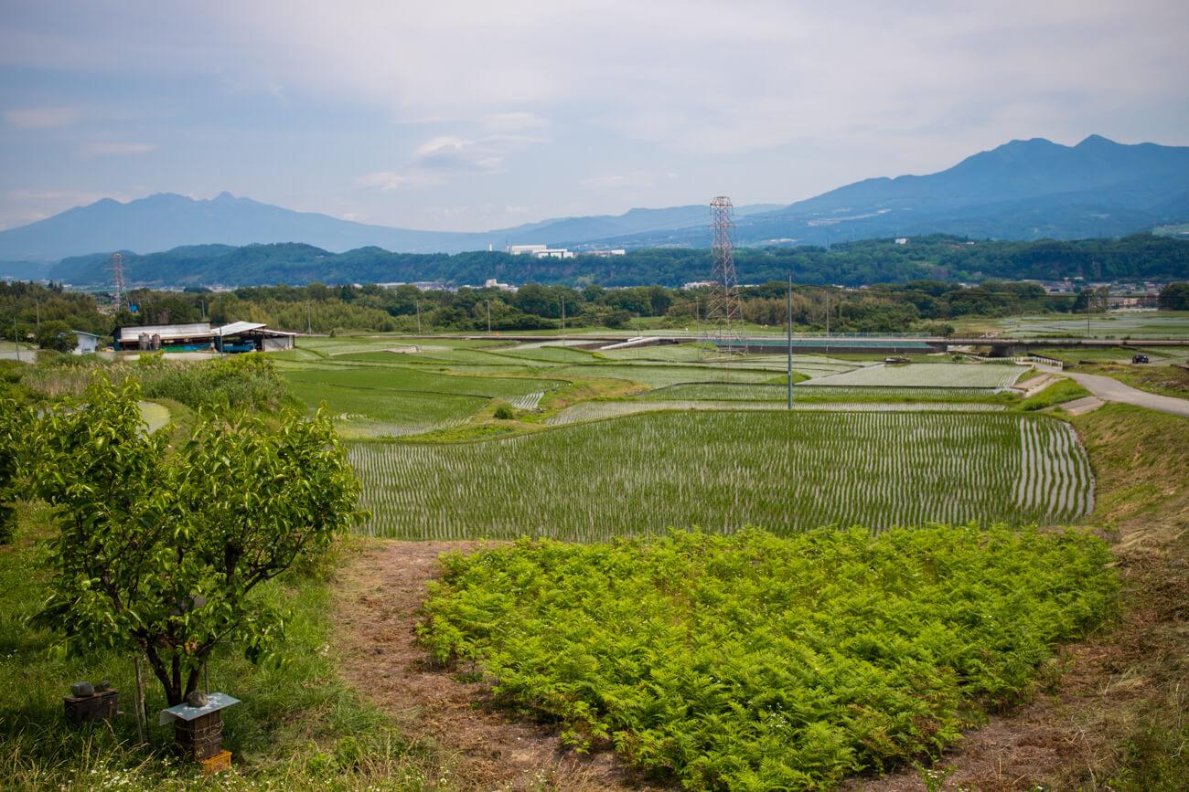 周辺の田園風景