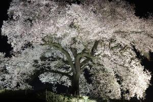 わに塚の桜の写真